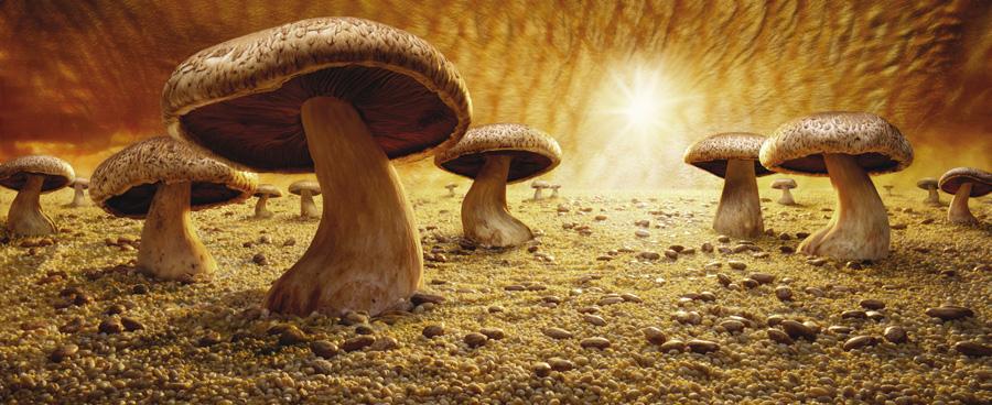 Mushroom Savanna fot. Carl Warner